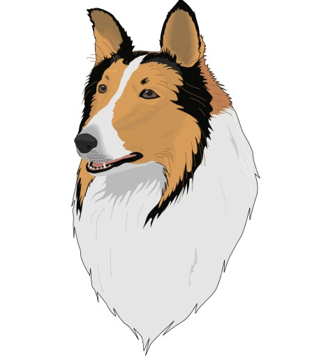 collie wandtattoo