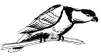 Frauenlori Aufkleber Vogelaufkleber Sticker