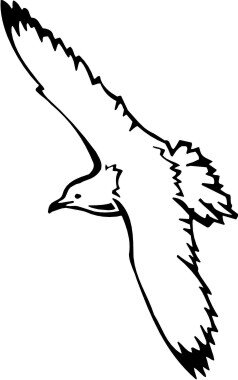 Möwe Aufkleber, Vogelaufkleber Seagull Sticker