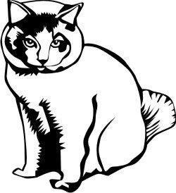 Katze Aufkleber, Katzen Sticker Cat DR