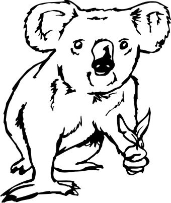 Koala 01 DH Aufkleber