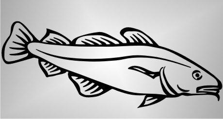 Kabeljau Fisch Aufkleber Sticker Angeln