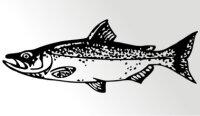 Lachs Fisch Aufkleber Sticker Angeln