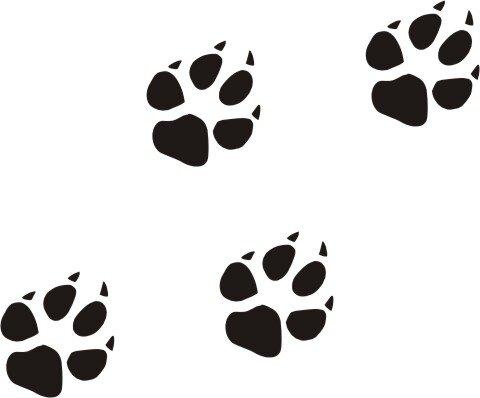 Hundepfoten Bilder