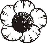 Buttercup Wandtattoo Tapeten Deko Hahnenfuß Blumen