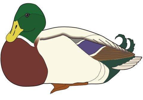 Ente Aufkleber im Digitaldruck MO01