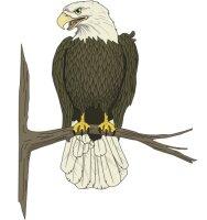 Adler Aufkleber im Digitaldruck MO03