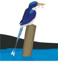Eisvogel Aufkleber im Digitaldruck MO02