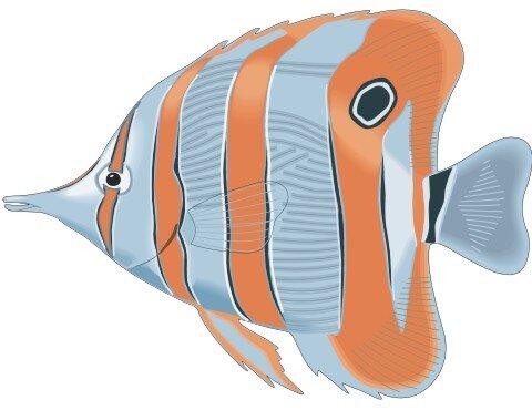 Falterfisch Aufkleber im Digitaldruck