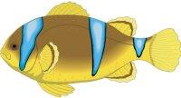 Clownfisch Aufkleber im Digitaldruck