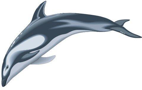 Delphin Aufkleber im Digitaldruck MO03