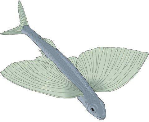 Fliegende Fisch Aufkleber im Digitaldruck