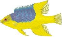 Eber Lippfisch Aufkleber im Digitaldruck