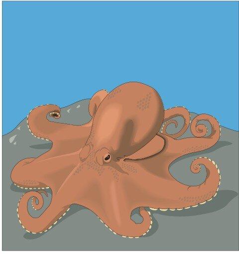 Kraken Aufkleber im Digitaldruck