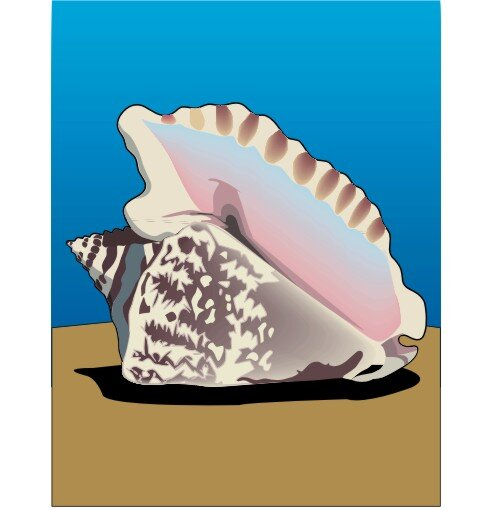 Muschelschale Aufkleber im Digitaldruck MO08