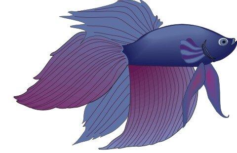 Siamesischer Kampffisch Aufkleber im Digitaldruck