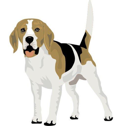 Beagle Hundeaufkleber im Digitaldruck