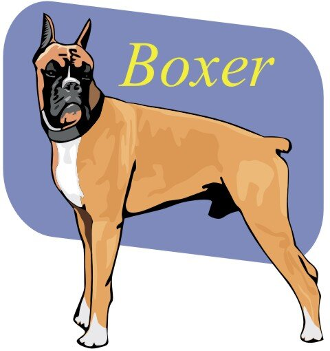 Boxer Hundeaufkleber im Digitaldruck