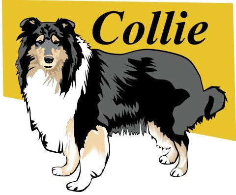 Collie Hundeaufkleber im Digitaldruck