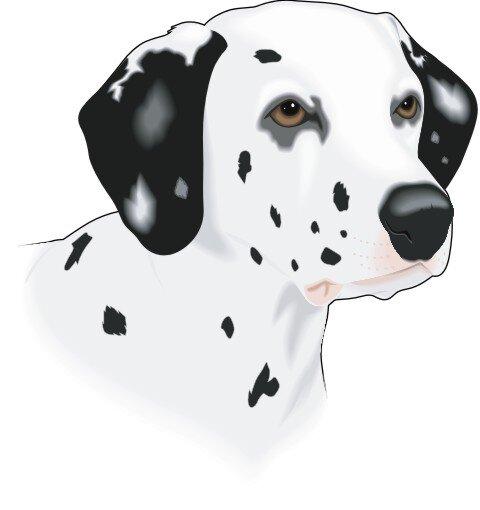 Dalmatiner Hundeaufkleber im Digitaldruck