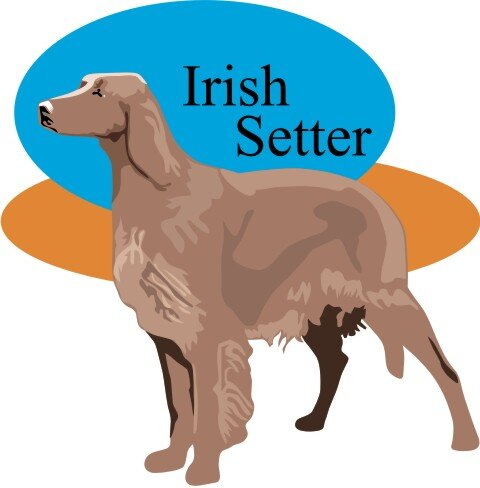 Irish Red Setter Hundeaufkleber im Digitaldruck