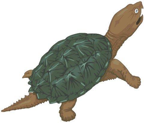 Schildkröte Aufkleber im Digitaldruck MO02