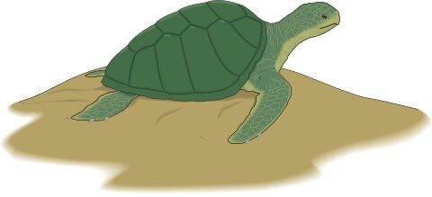 Schildkröte Aufkleber im Digitaldruck