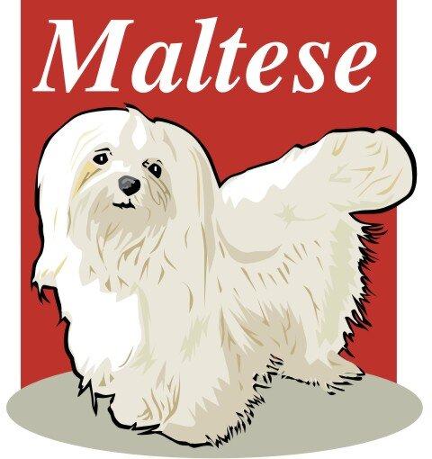 Malteser Hundeaufkleber im Digitaldruck