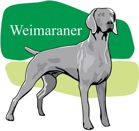 Weimaraner Hundeaufkleber im Digitaldruck