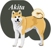 Akita Wandtattoo im Digitaldruck