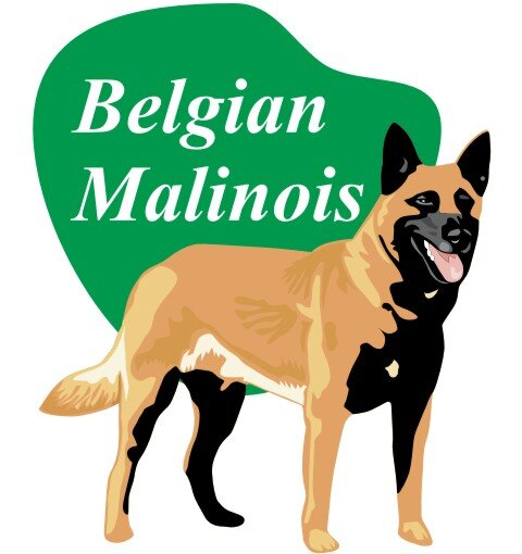 Belgian Malinois Wandtattoo im Digitaldruck
