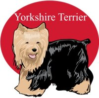 Yorkshire Terrier Wandtattoo im Digitaldruck