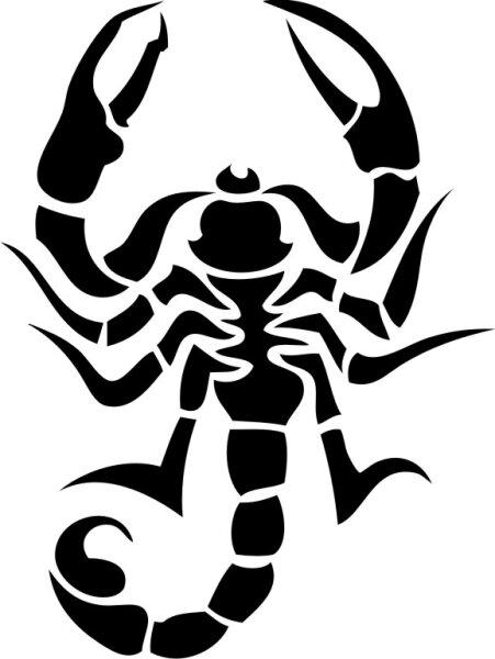 Skorpion Wandtattoo Tapeten Deko M-13