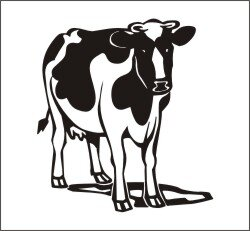 Kuh Aufkleber