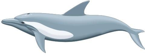 delphin aufkleber