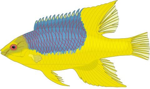 eber lippfisch aufkleber