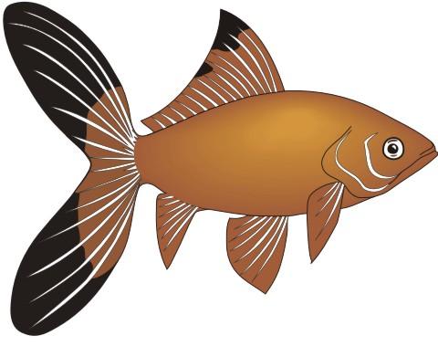 goldfisch komet aufkleber