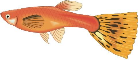 guppy fisch aufkleber