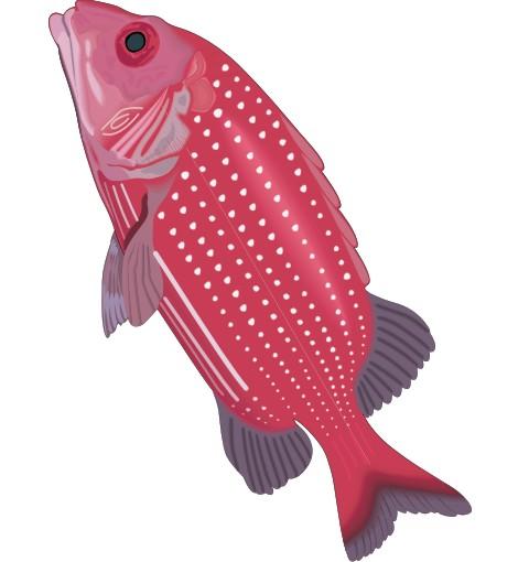 husarenfisch aufkleber