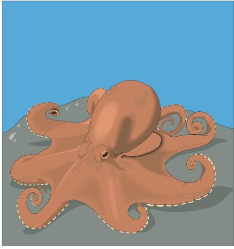 kraken aufkleber