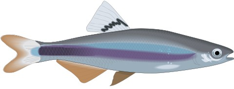 sailfin aufkleber