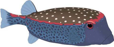 schwarzpunkt kofferfisch aufkleber