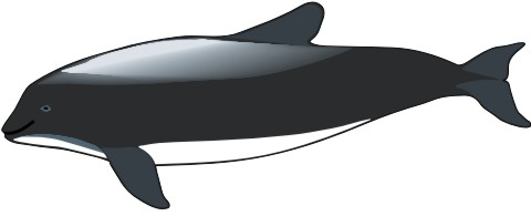 schweinswal aufkleber