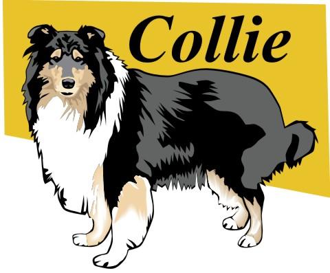 collie aufkleber