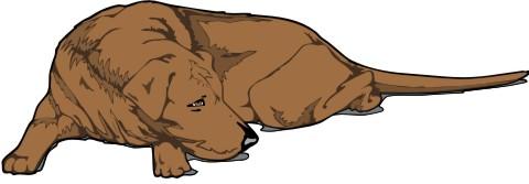 sleeping dog aufkleber