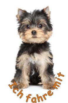yorkshire terrier farbige aufkleber