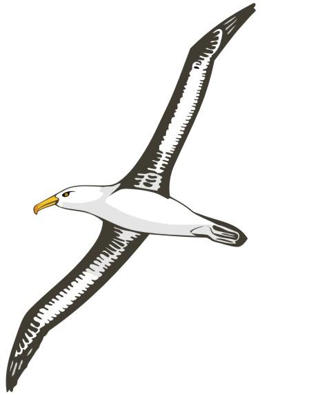 albatross aufkleber