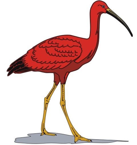 heiliger ibis aufkleber