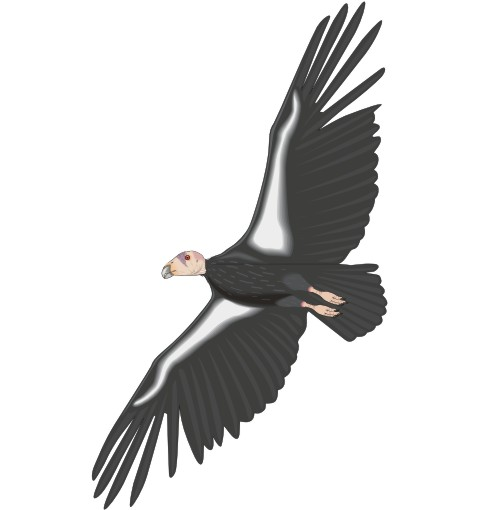 kondor aufkleber condor