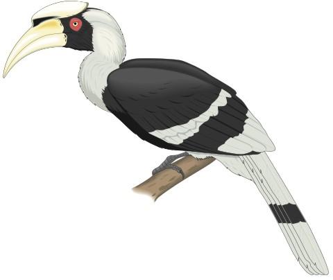 nashornvogel aufkleber